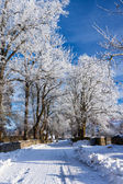 Vinterväg som kör mellan frysta träd. — Stockfoto