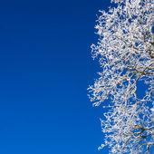 冬の木の詳細 — ストック写真