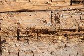 Antigo fundo de textura de madeira da parede — Foto Stock