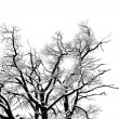 Winter tree conceptual photo — Stock Photo