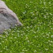 Granite stone in clover field — Stock Photo