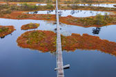 Torfmoor swamp Europa — Stockfoto