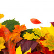 Stock Photo: Beautiful colorful autumn leaves
