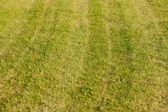Trama bella erba verde — Foto Stock