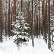 Winter forest with snow — Stock Photo #32158155