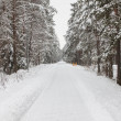 Winter forest with snow — Stock Photo #32158191