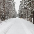 Winter forest with snow — Stock Photo