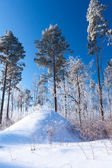 Beautiful winter forest — Stok fotoğraf