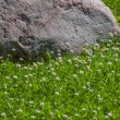 Granite stone in clover field — Stock Photo #34488655