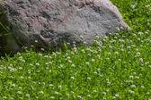 クローバー フィールドの花こう岩の石 — ストック写真