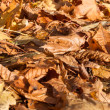 Colorful backround image of fallen autumn leaves — Stock Photo #35139295