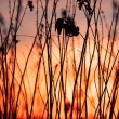 Rural grass and sunset sky — Stock Photo