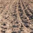 Stock Photo: Field arable