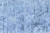 Zimní stromy — Stock fotografie