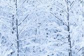 Zimą drzewa — Zdjęcie stockowe