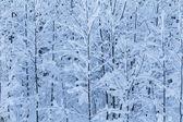 Winter bomen — Stockfoto