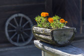 Flowers in the wooden pot — Stock Photo