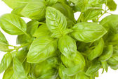 Basil in a pot — Stock Photo