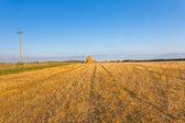 Piled hay bales on a field against blue sky — Stock Photo