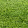 Royalty-Free Stock Photo: Beautiful green grass of the football field.