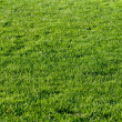 Beautiful green grass of the football field. — Stock Photo #13164360