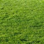 Beautiful green grass of the football field. — Stock Photo