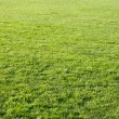 Beautiful green grass of the football field. — Stock Photo #13164649