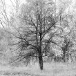 Black and white autumn landscape with graphical trees. — Foto de Stock