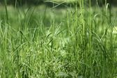 Lawn grass on a sunny day — Stock Photo