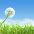 Dandelion on blue sky background - Stock Photo