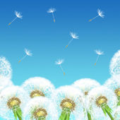 Dandelions on a background of blue sky — Stock Photo