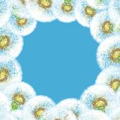 Frame dandelions on blue sky background — Stock Photo