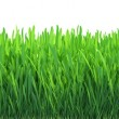 Green grass isolated on white background — Stock Photo #43913571