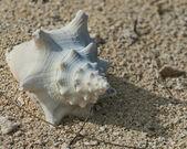 Mušli na pláži — Stock fotografie