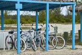 Beach Cruiser Bicycles — Stock Photo