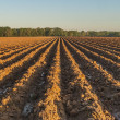 Furrows in Red Earth — Stock Photo #12622349