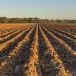 Furrows in Red Earth — Stock Photo
