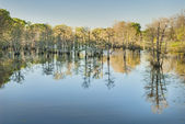Bald Cypress Reflections in Bayou — Stock Photo