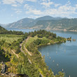 Vineyard & Orchards in ColumbiRiver Gorge — Stock Photo #13217884