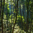 Sunbeam in Forest — 图库照片
