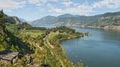 Vineyard & Orchards in Columbia River Gorge — Stock Photo