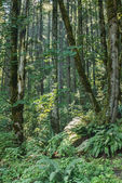 Forest in Cascade Mountains — Stock Photo