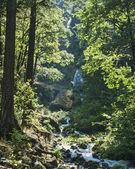 Wahkeena Falls in Columbia River Gorge — Stock Photo