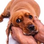 Hand Caressing Dog — Stock Photo