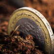 Stock Photo: Coins in Soil