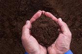 Businessman Holding Soil — Stock Photo