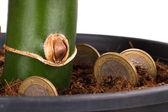 Coins in Soil — Foto de Stock