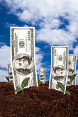 Dollar Banknotes on Soil — Stock fotografie