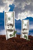 Banknoty dolarów na ziemi — Zdjęcie stockowe