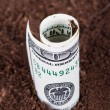 Dollar Bill Growing in Soil — Stock Photo